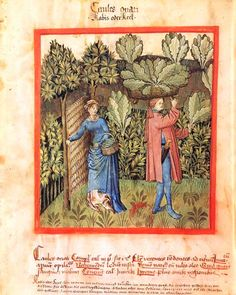 Tacuinum Sanitatis,15th c. Paris, BnF, Département des manuscrits, Latin 9333 fol. 20