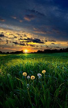 ✯ Spectators by Phil Koch...How beautiful the open space of the country is. I wouldn't live anywhere else!!!