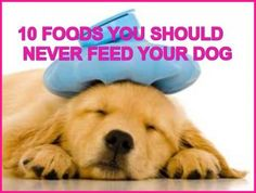 10 Foods You Should Never Feed Your Dog...see more at PetsLady.com -The FUN site for Animal Lovers