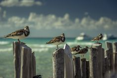 Birds from Mexico | by Alexey Grigoryev