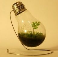 How to Make Homemade Light Bulb Jar : Reusing And Recycling Is Fun & Useful. Today I Will Talk About Light Bulb Jar And The Uses Of It. Changing Burned Light Bulbs To Useful House Items Is Fun & Useful. Mini Terrarium, Light Bulb Terrarium, Terrarium Ideas, Planter Ideas, Repurposed Items, Upcycled Crafts, Diy Originales, Light Bulb Art, Recycling