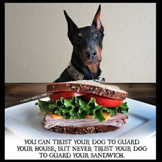 Trust your dog to guard to your house, but never trust your dog to guard your sandwich. Re-pinned from Forever Friends Fine Stationery & Favors http://foreverfriendsfinestationeryandfavors.com