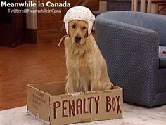 How dogs are trained in Canada