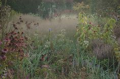 Piet Oudolf is a Dutch garden and landscape designer, who focuses on natural gardens and skillfully uses a lot of grasses in his works. The ...