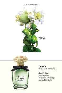 Dolce Eau de Parfum - scents for 2014 Would you rather associate sunny sidewalks with garbage waft, or with the asphalt and pollen top-notes of Serpentine by Comme des Garçons? Perfume Scents, Perfume Bottles, Parfum Yves Rocher, Miss Dior Blooming Bouquet, Ariana Grande Perfume, Perfume Recipes, Essential Oil Perfume, Essential Oils, Best Fragrances