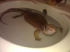 Just chilling x bosc monitor