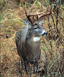 Pro Tips For Hunting Whitetails In The Rain [ EgozTactical.com ] #hunt #tactical #survival- www.agvantagefarmandranch.com has everything you need from deer feeders, blinds, feed and 4×4 bugies