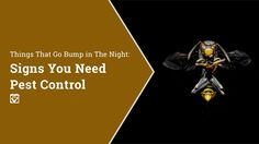Things That Go Bump in The Night: Signs You Need Pest Control