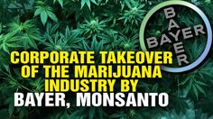All signs point to a corporate takeover of the marijuana industry by Bay...
