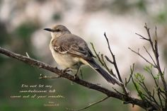 It was quiet as I walked by the small grove. Looking up, I saw a mockingbird sitting silently in the branch of an orange tree. For some reason, he wasn't in the mood for talking. It seems like when...
