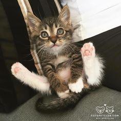 C U T E !!!! #kitty cat cute adorable AWW OMG
