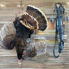 Off-Season Bonus: Crossbow Turkey Hunting Tips Hunting Vest, Hunting Tips, Survival Weapons, Survival Gear, Turkey Hunting Season, Crossbow Targets, Free Shoot, Carbon Arrows, Crossbow Hunting