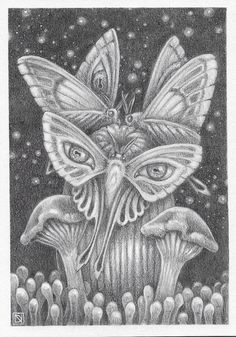 Kepler's Moths by David Natale