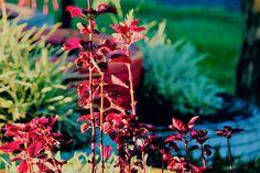 Se eu pensar muito na vida, morro cedo. #flowers #flower #petal #petals #nature #beautiful #love #pretty #plants #blossom #sopretty #spring #summer #flowerstagram #flowersofinstagram #flowerstyles_gf #flowerslovers #flowerporn #botanical #floral #florals #insta_pick_blossom #flowermagic #instablooms #bloom #blooms #botanical #floweroftheday http://gelinshop.com/ipost/1519986059096848519/?code=BUYE0R8A3iH