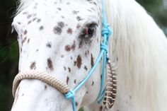 touwhalster horse charm