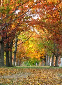Bryn Mawr College, Bryn Mawr, PA  ~this is senior row in autumn!