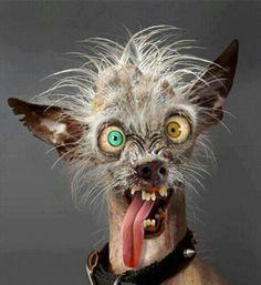 El perro más feo  my next dog because he looks like i feel