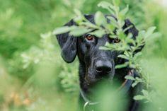 threedogsnight:  Mini by filipovsky on Flickr.