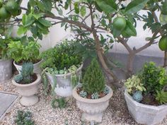 We live on small property lots on Lido Isle in Newport Beach, California so we try to make the most of our little gardens. 1. Vintage Cement Pots (for a French Provençal look) I collect aged cement pots and fill them with succulents and herbs. They are placed on pea...Read More »