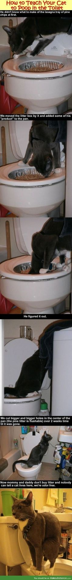 Teach The Cat to Shit in the Toilet