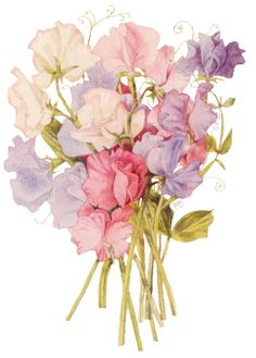 deze bloemen hebben een zeer zoete geur.