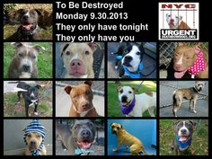 13 dogs are almost out of time. The shelter opens@ 8am. U have until 12 PM (NOON EST) 2 rescue a dog on the list. If u're a serious ADOPTER & ONLY if u're able 2 go 2 the shelter in person w/in 48 hrs, go 2 the NYC ACC website http://www.nycacc.org/PublicAtRisk.htm to reserve a PUBLIC list dog w/a deposit. If the dog is NOT on the publc adoption site contact a rescue 2 adopt/foster. More info & a list of rescues: https://www.facebook.com/Urgentdeathrowdogs/app_137541772984354?ref=ts