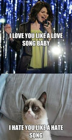 you go grumpy cat! - Grumpy Cat - Ideas of Grumpy Cat - you go grumpy cat! The post you go grumpy cat! appeared first on Cat Gig. Grumpy Cat Quotes, Funny Grumpy Cat Memes, Funny Animal Jokes, Cat Jokes, Cute Funny Animals, Funny Cats, Grumpy Cats, Angry Cat Memes, Funniest Animals