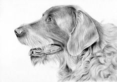 Rysunek psa wykonany ołówkiem