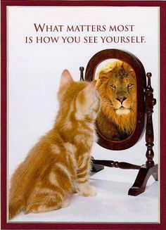 """""""What Matters Most Is How You See Yourself."""" Words to live by. Self Confidence means you can still be happy with yourself regardless of success or failure Funny Animal Pictures, Funny Animals, Cute Animals, Funny Cats, Funny Images, Weird Cats, Funny Gym, Small Animals, Funny Laugh"""