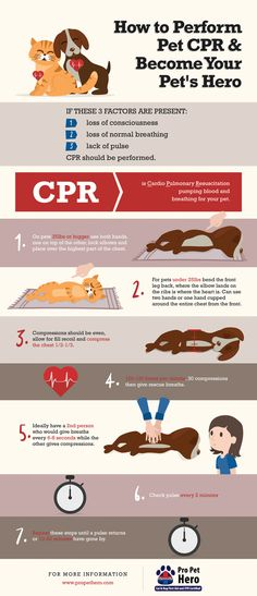 Cat and Dog CPR Having the knowledge to save your pet is literally possessing the ability to be their hero. It sounds like a grandiose concept but you shouldnt think of this skill as somethi Cat Cpr, Dog Cat, Pet Pet, Dog Care Tips, Pet Care, Tortoise As Pets, Sick Cat, Cat Behavior, Animales