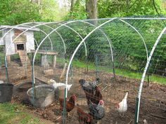 please help...need to build chicken run fast and cheap! (chickens forum at permies)