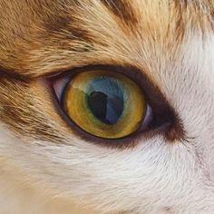. . . #냥스타그램 #고양이 #눈 #고양이눈 #털복숭이 #cat #catstagram #catsofinstagram #purr #fluffy #meow # # #daily #dailypic #ねこ #Katze #gato #猫 #kitty #kitten #paw #catseye #cateyelovely.rita.rdando2016/02/29 02:32:59
