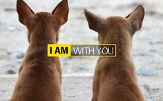"The new ""I AM"" campaign from Nikon. It's quite old school advertising but I'm kind of like it."
