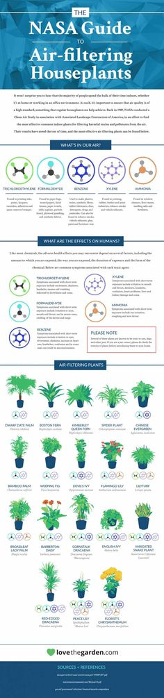 Want to know what air purifying plants you can put in your home? The rocket scientists at NASA recommend these fine plant specimens for your care and comfort.
