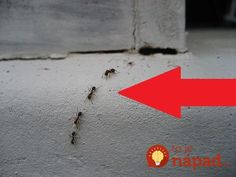 How to Get Rid of Ants with Three Ingredients-good to know.just in case!