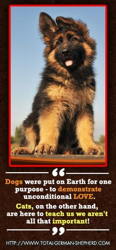 Dogs put on earth for one purpose to demonstrate unconditional LOVE. <3