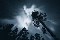 trees up to the sky-joni niemelä