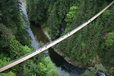 Take a look through our gallery and get inspired! Contact us today to learn how we can enhance your experience at Capilano Suspension Bridge Park!