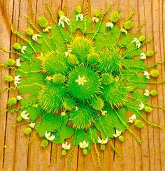 Artista americana Kathy Klein cria lindas mandalas com flores - Casa Claudia