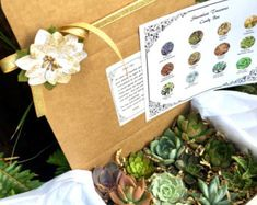 Succulent Treasures Birthday Candy Gift Box. by SucculentTreasures