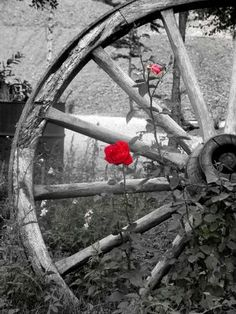 OLD  WAGON  WHEEL   AND  ROSE . . . AWESOME !!