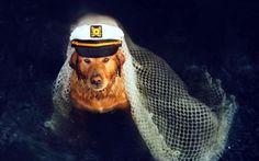 żeglarz