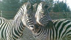 Afrikamúzeum Balatonederics Túra Gyerekkel is Animals, Animales, Animaux, Animal, Animais