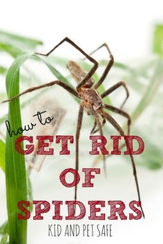 It's that time of year when spiders creep into our homes. Are you tired of worrying where you'll find one next? Try these kid and pet SAFE METHODS to get rid of spiders and keep them from coming back. What Kills Spiders, Killing Spiders, Homemade Spider Spray, Natural Spider Repellant, Spider Killer, Get Rid Of Spiders, House Spider, Types Of Insects, Pest Solutions