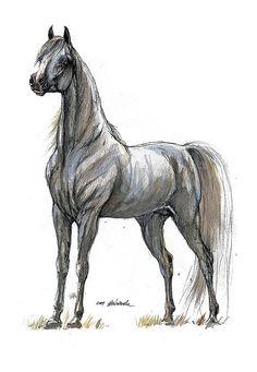 Grey arabian horse, equine art, horse art, original pen and watercolor painting