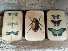 Three Natural History Bookplate Vintage style tins for keepsakes - dragonfly, butterfly and beetle by Pennybright Studios