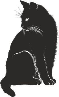 Gato, Sombra, Silueta, Negro