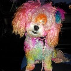 Pet Paws, Cute Animals, Dog, Pets, Beauty, Instagram, Pretty Animals, Diy Dog, Cutest Animals