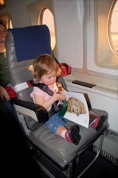 11 Best Cares Airplane Safety Harness Images Fly Safe