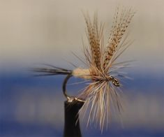 Video: How to Tie a Catskills-Style March Brown Dry Fly - Orvis News